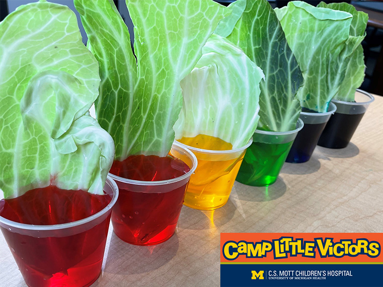 Lettuce leaves in colored water as part of an activity for Camp Little Victors.